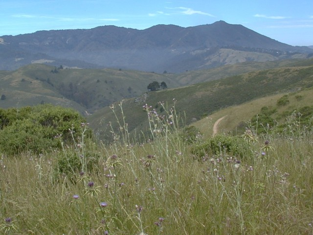 View North To Mount Tamalpais Ridgeline