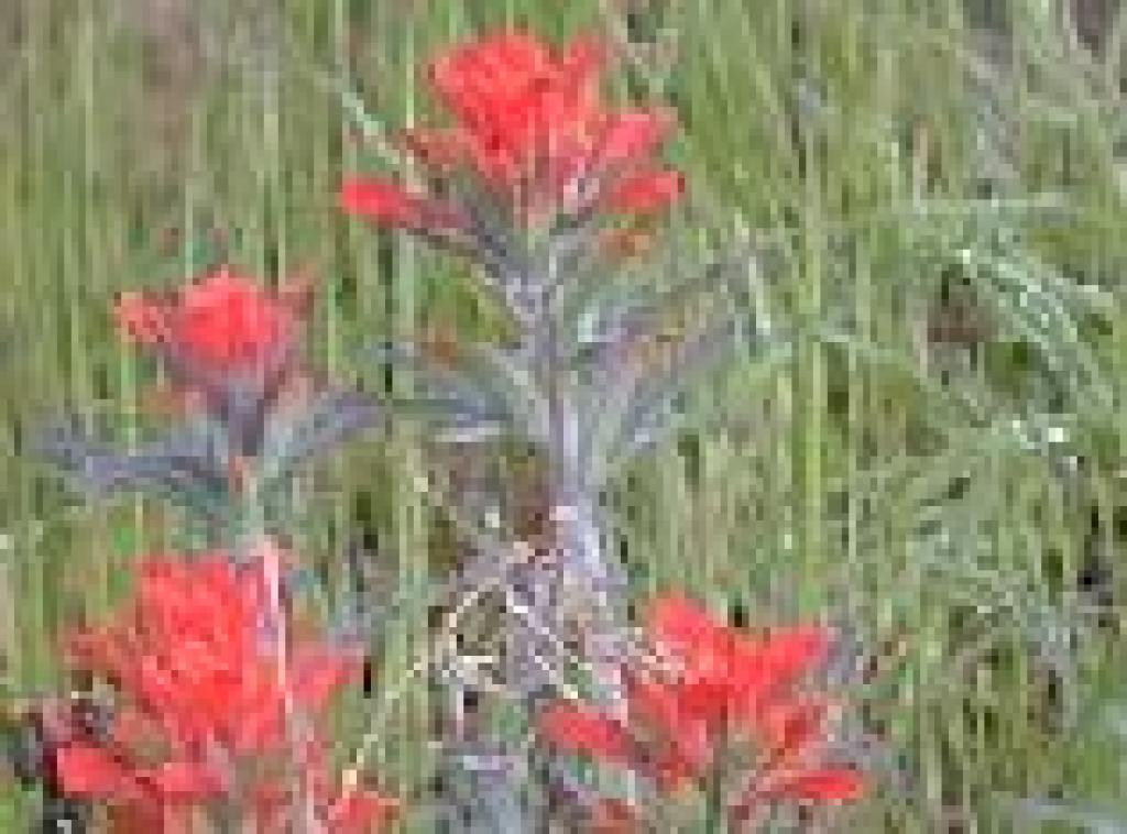Photo of paintbrush