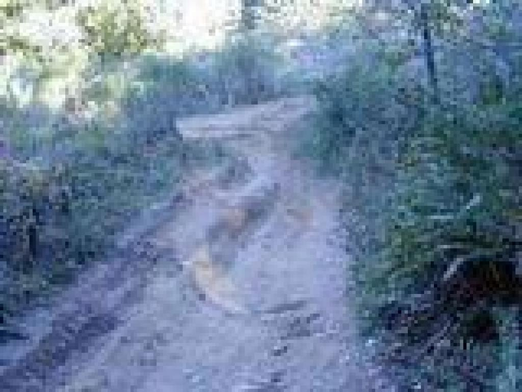 Rutted trail
