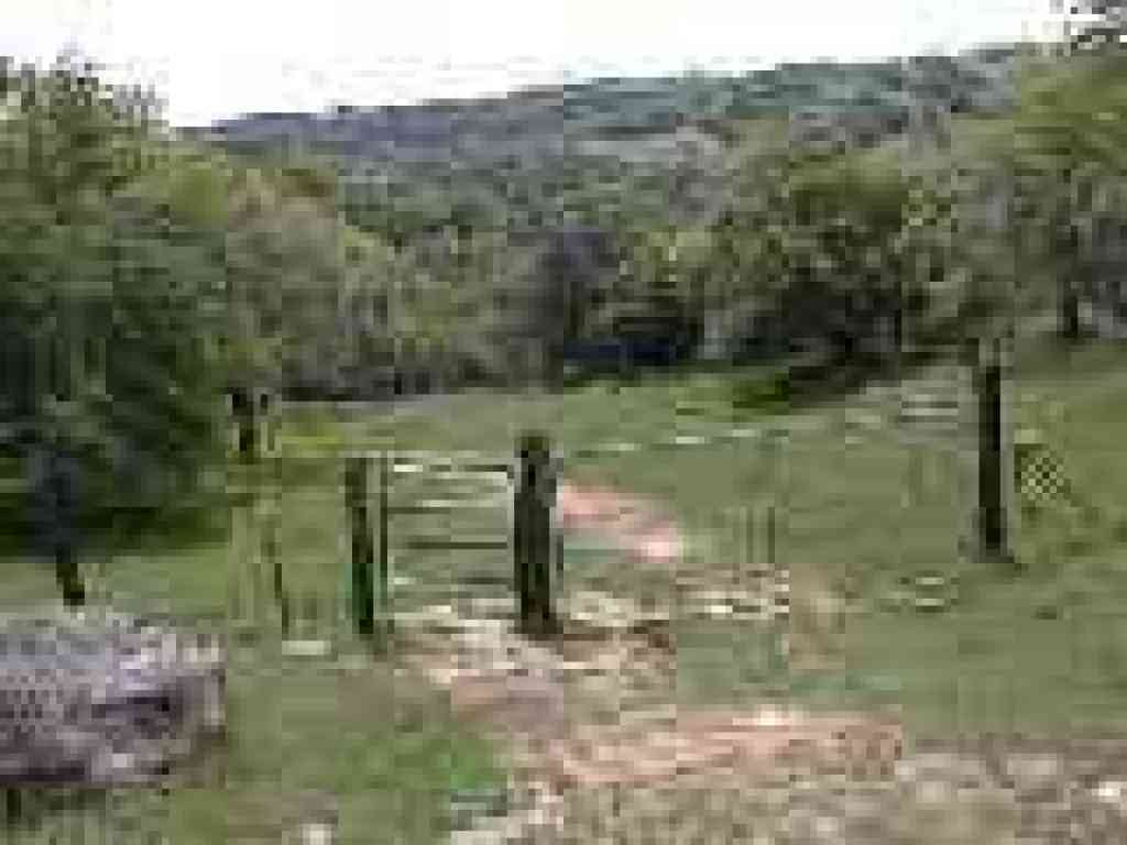 Cattle gate