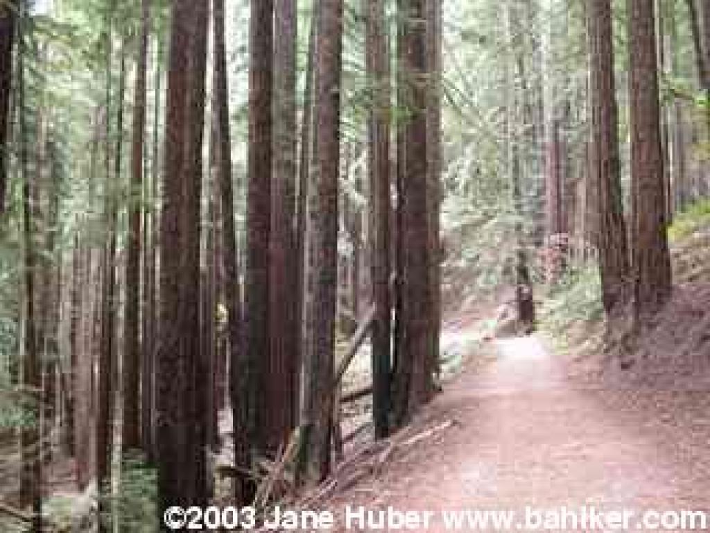 Tres Sendas Trail