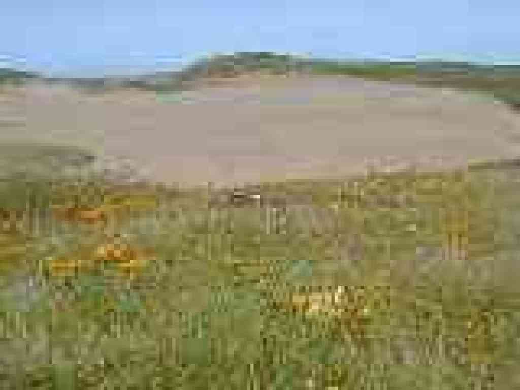 Flowers and dunes