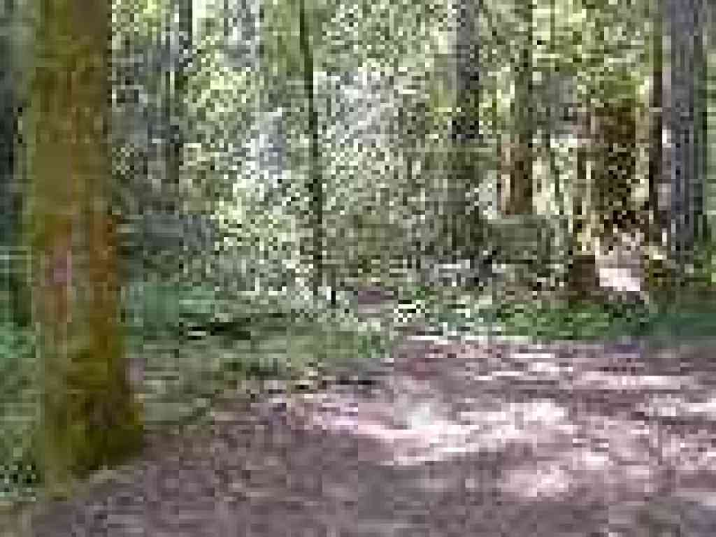 Start of South Fork Trail