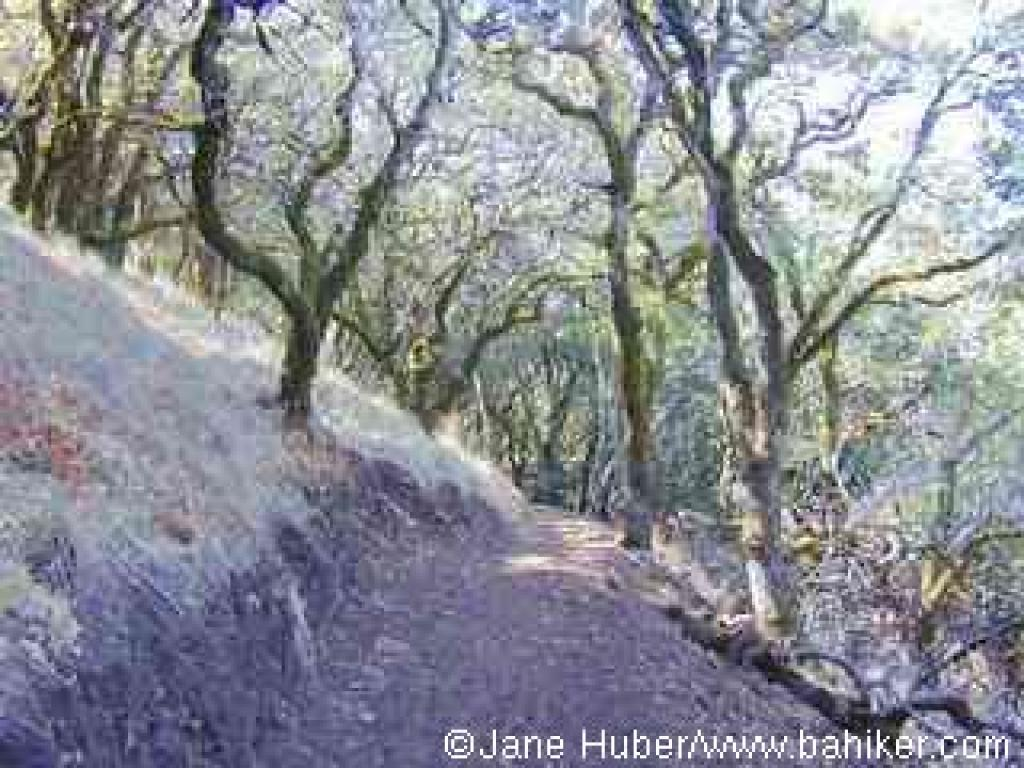 Sonoma Ridge Trail
