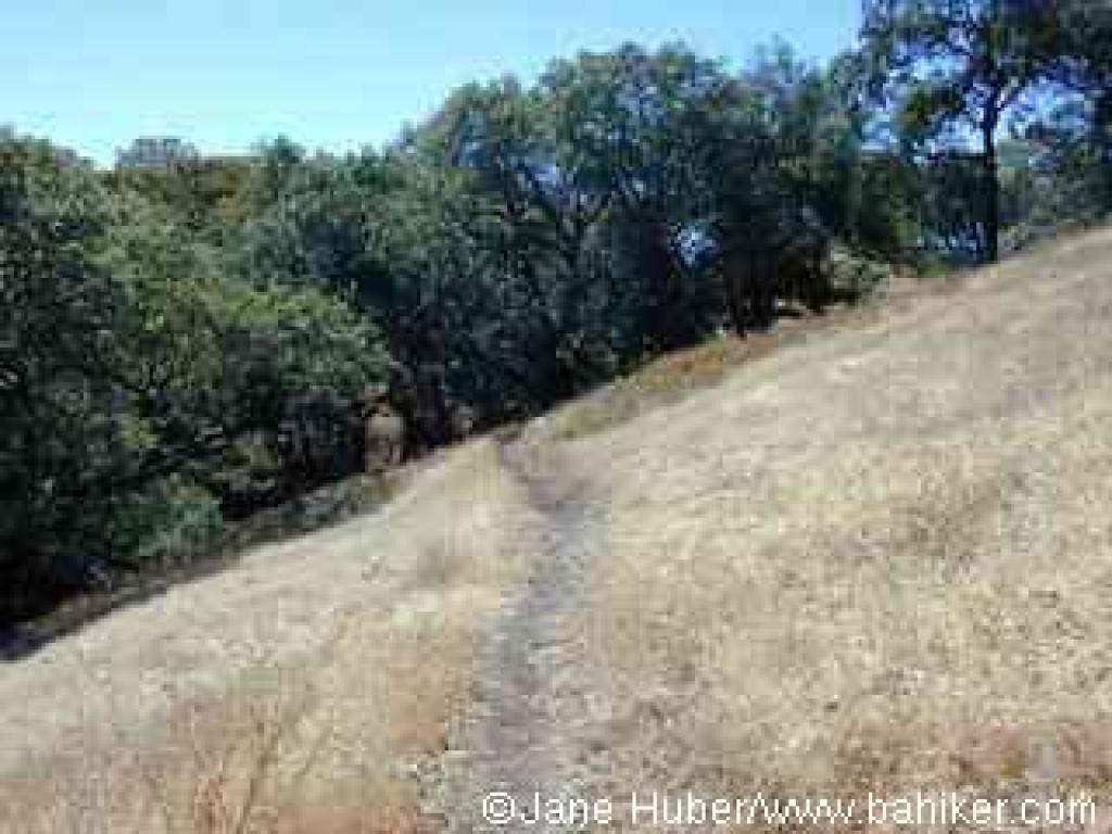 Near the end of Sonoma Ridge Trail