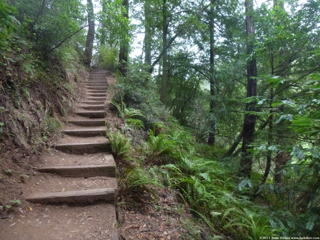 Bay Area Hiker: Mountain Home-Muir Woods Loop