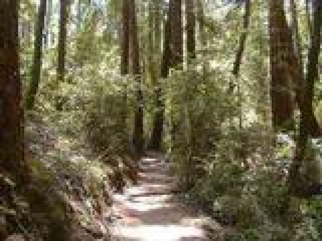 Bootjack Trail