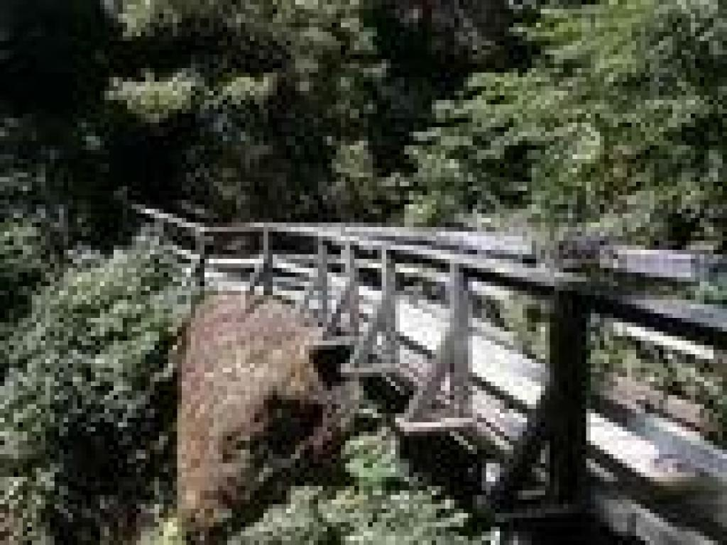 Bridge at Rattlesnake Creek