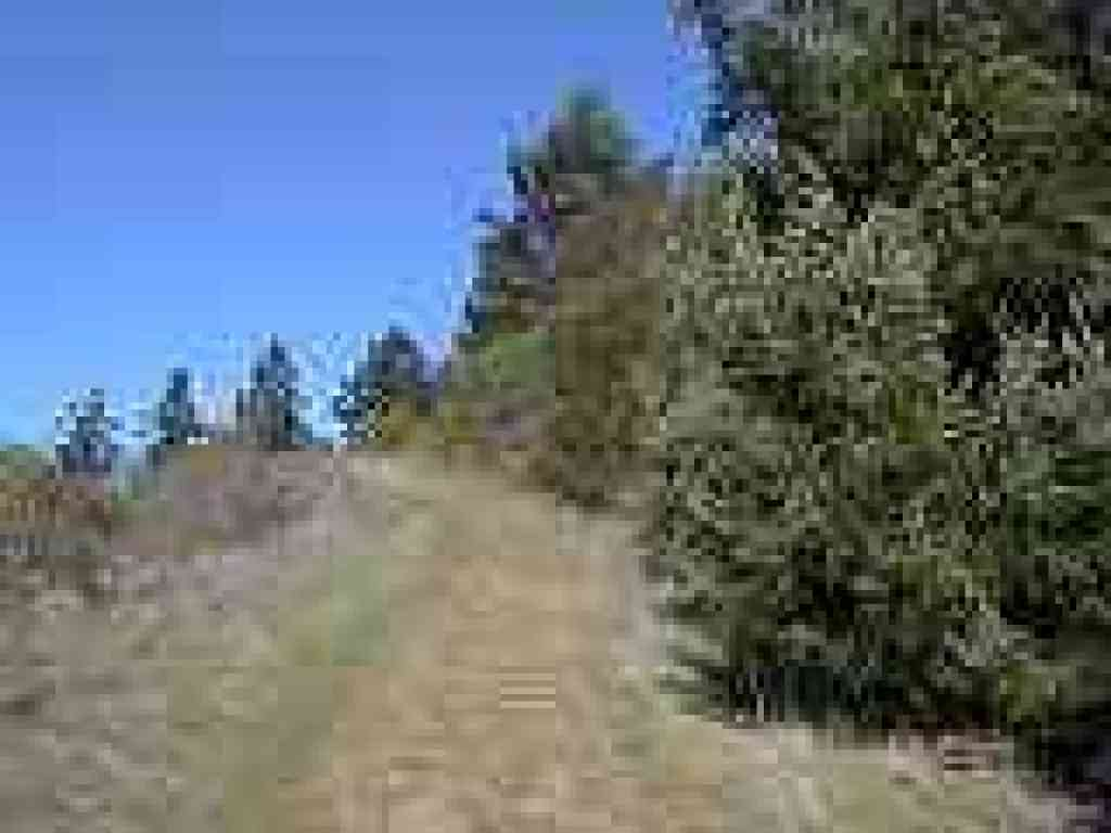 Douglas firs line the trail