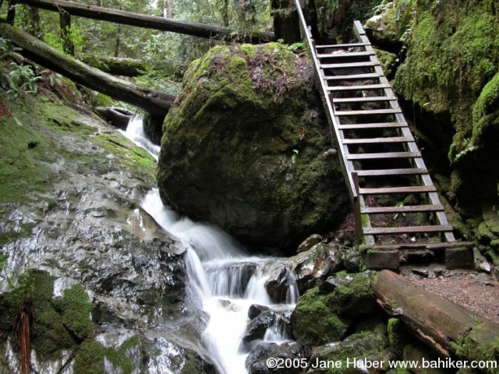 Photo of the ladder on Steep Ravine by Jane Huber from www.bahiker.com