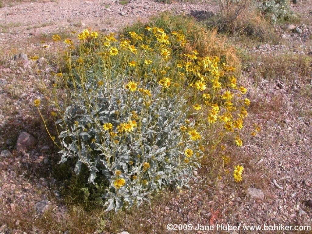Examples of desert plantsDesert Biome Plants