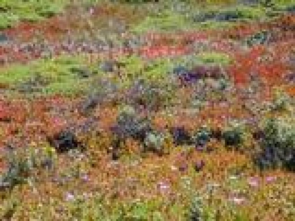 Paintbrush amid seafig