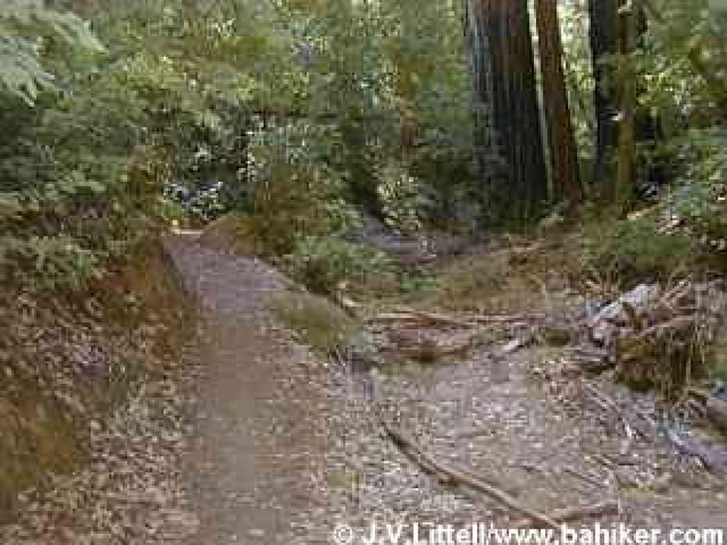 Pine Mountain Trail