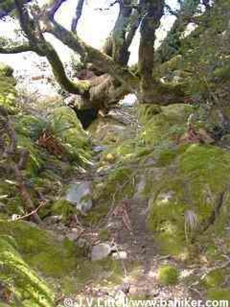 Oak and mossy rocks