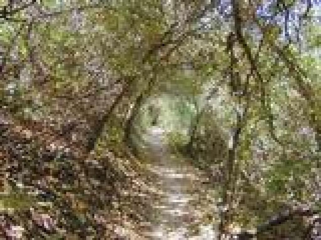 Tunnel of vegetation