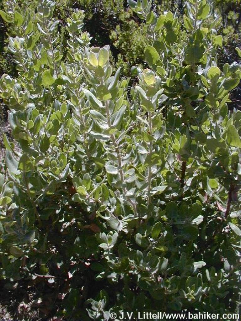 Rock County Honda >> Manzanita in autumn, their quiet season