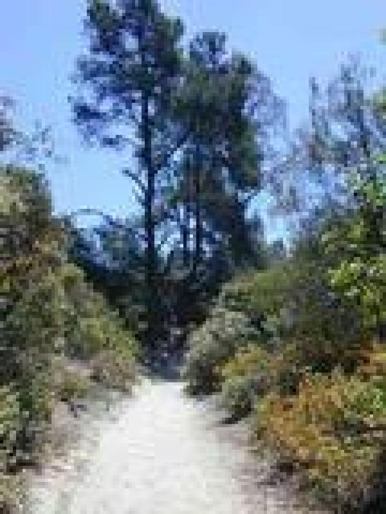 Trail through chaparral