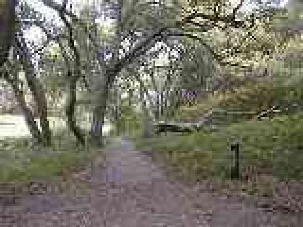 Live Oak Nature Trail