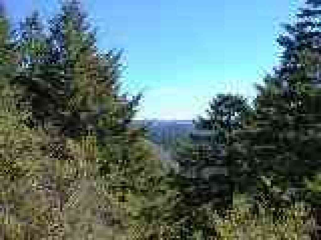 View through the Douglas firs