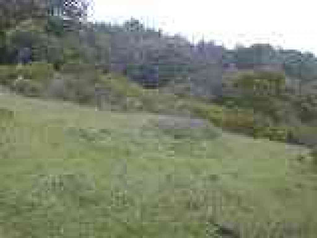 Sloping grassy meadow