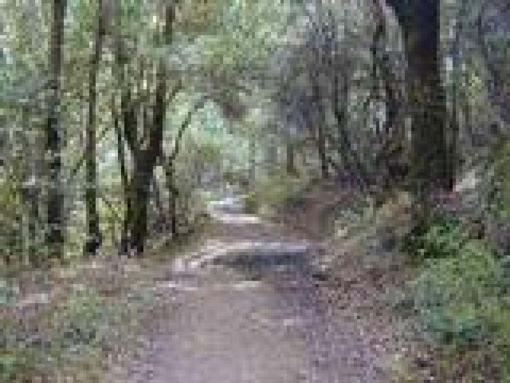 Stevens Creek Nature Trail