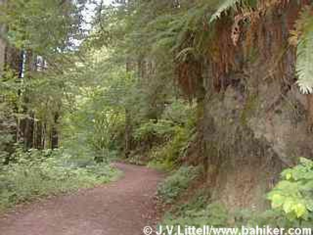 Purisima Creek Trail photo