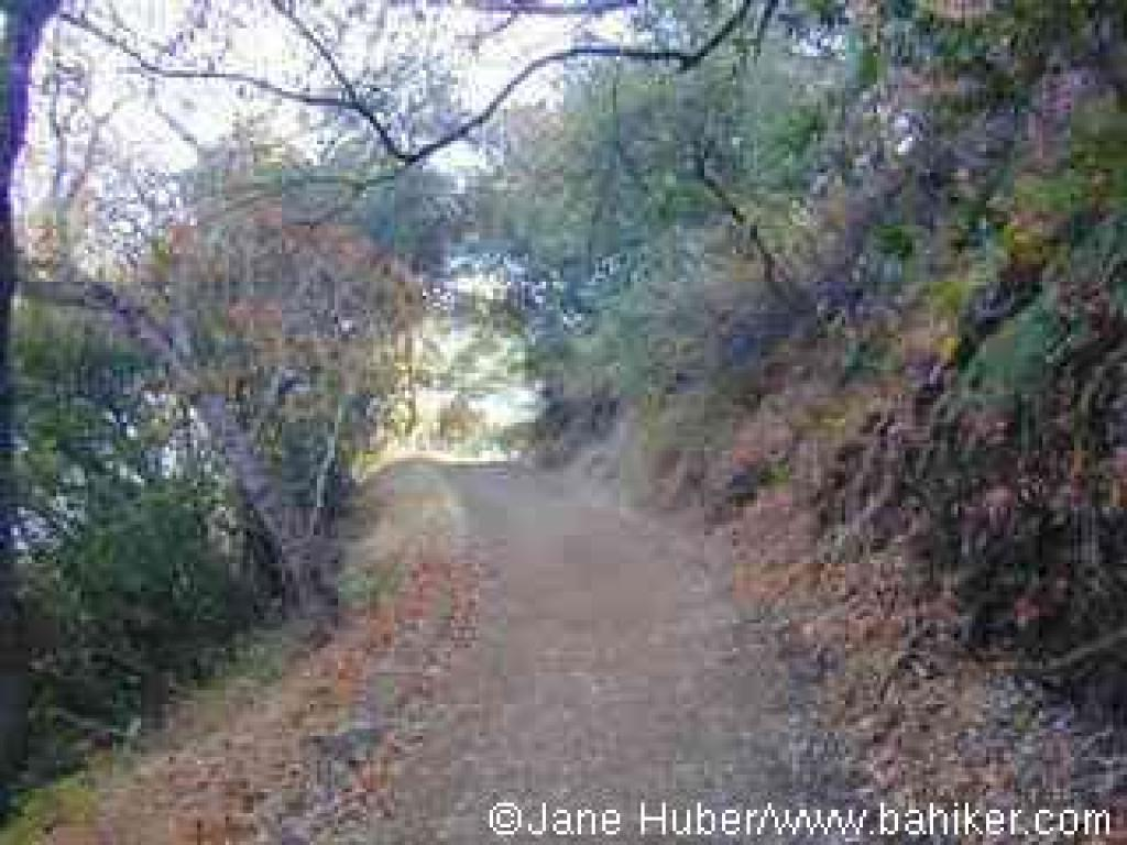 Rhus Ridge Trail