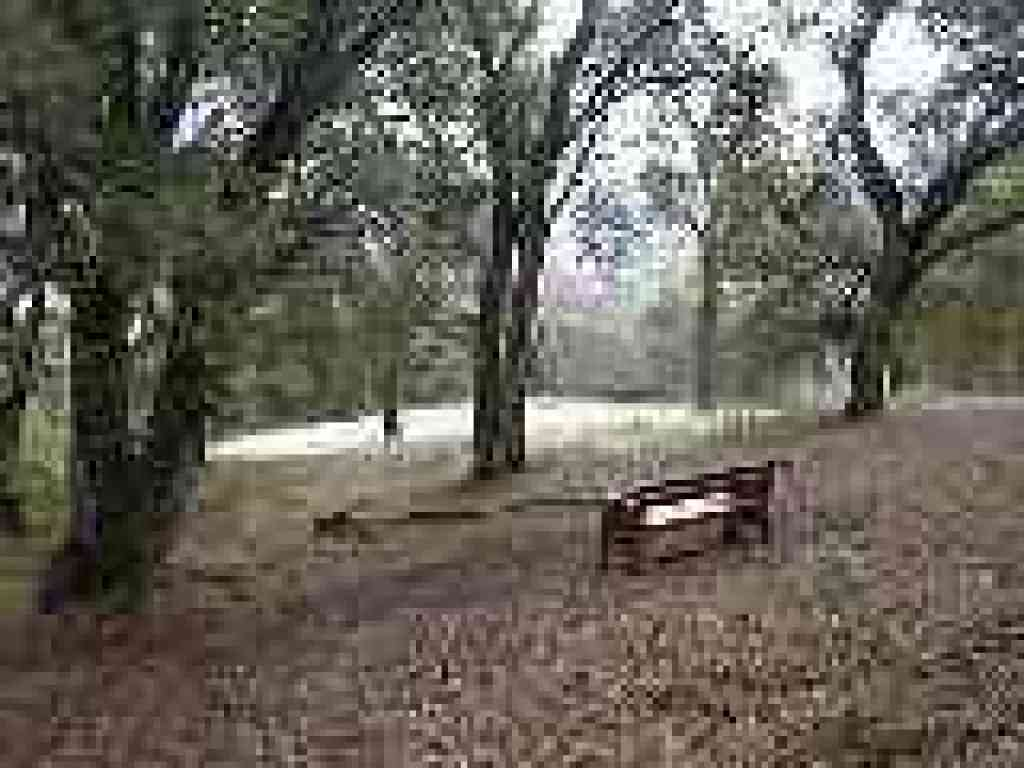 Photo of bench under coast live oak