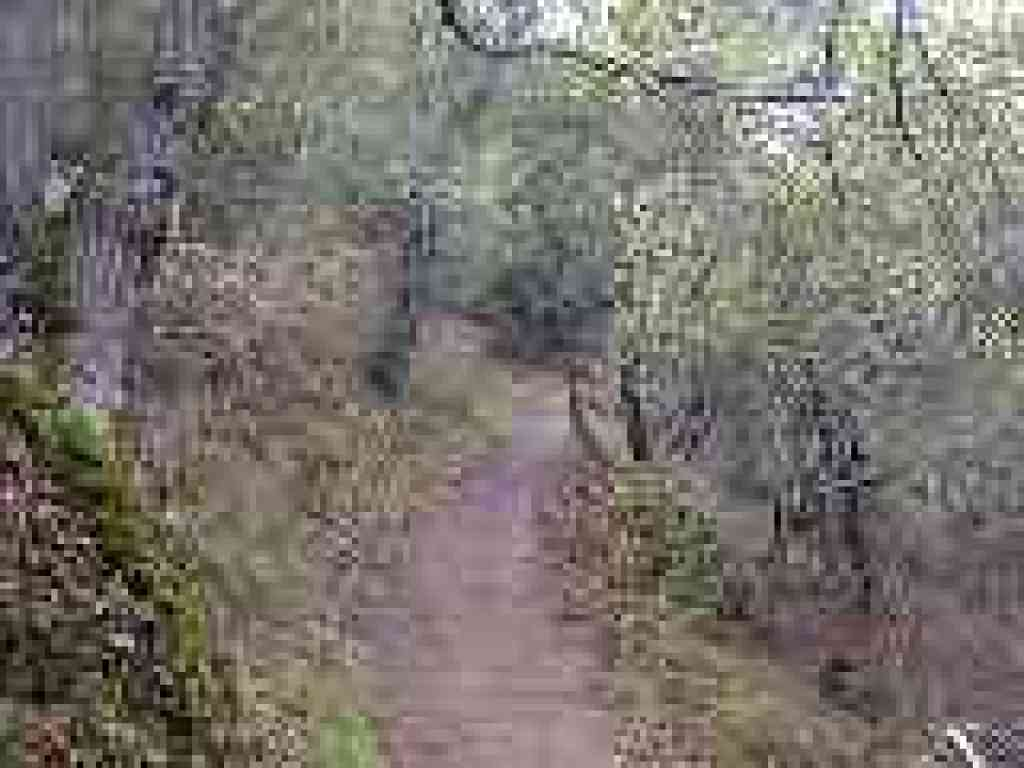 Photo of trail through woods