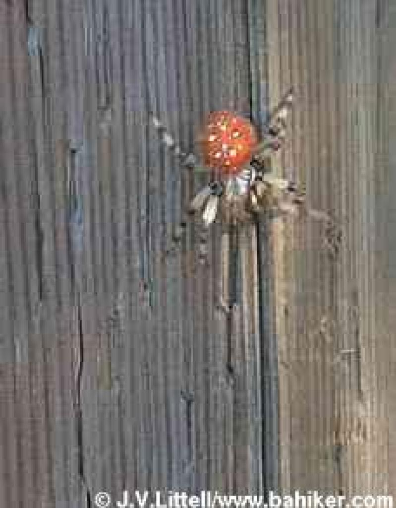 Spider on a signpost at San Bruno Park