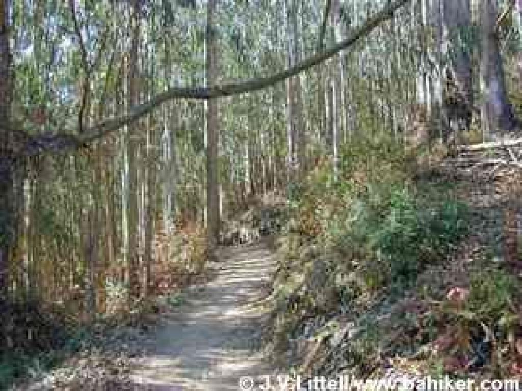 Eucalyptus forest on Montara Mountain Trail