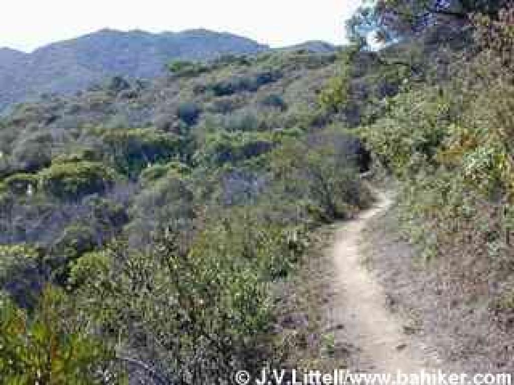 Chaparral on Montara Mountain Trail