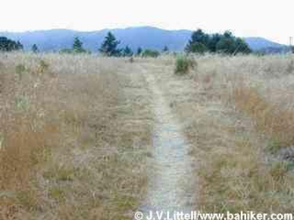 Heritage Grove Trail ends at a high meadow on Towne Ridge
