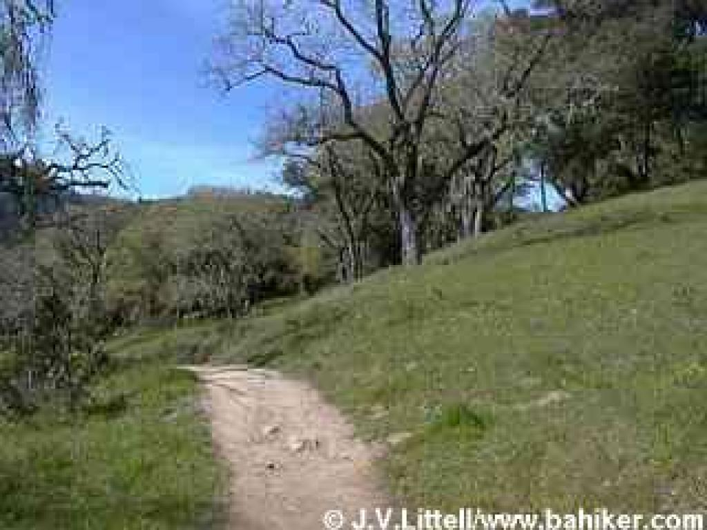 http://www.bahiker.com/pictures/southbay/windyhill/031901/small/020trail.jpg