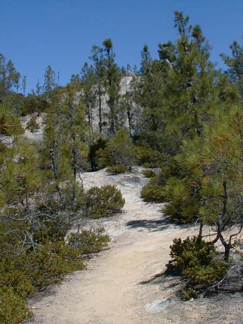 Bay Area Hiker: Big Basin Redwoods State Park -- Buzzard\'s Roost