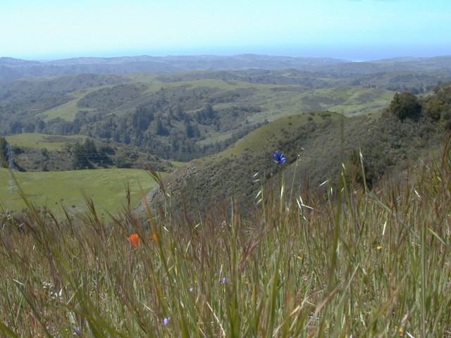 Bay Area Hiker: La Honda Creek Open Space Preserve