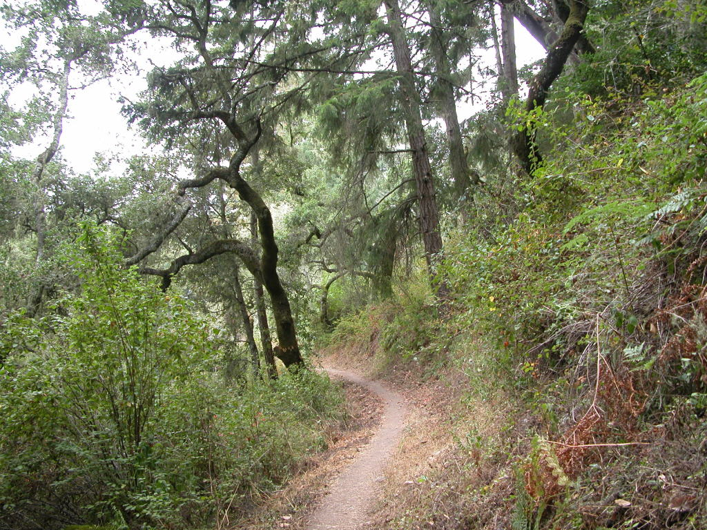 Tunitas creek open space preserve